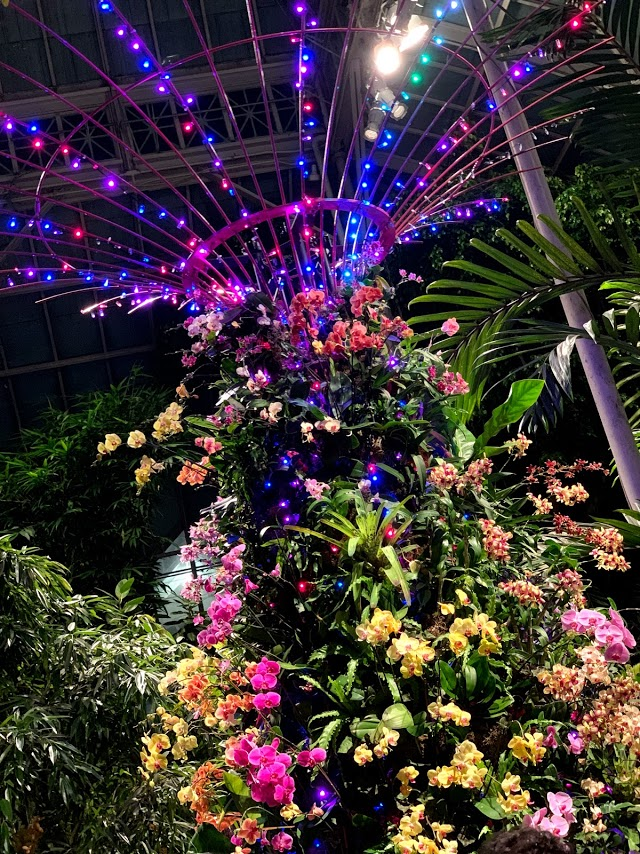 Nyc Guide The Orchid Show New York Botanical Garden